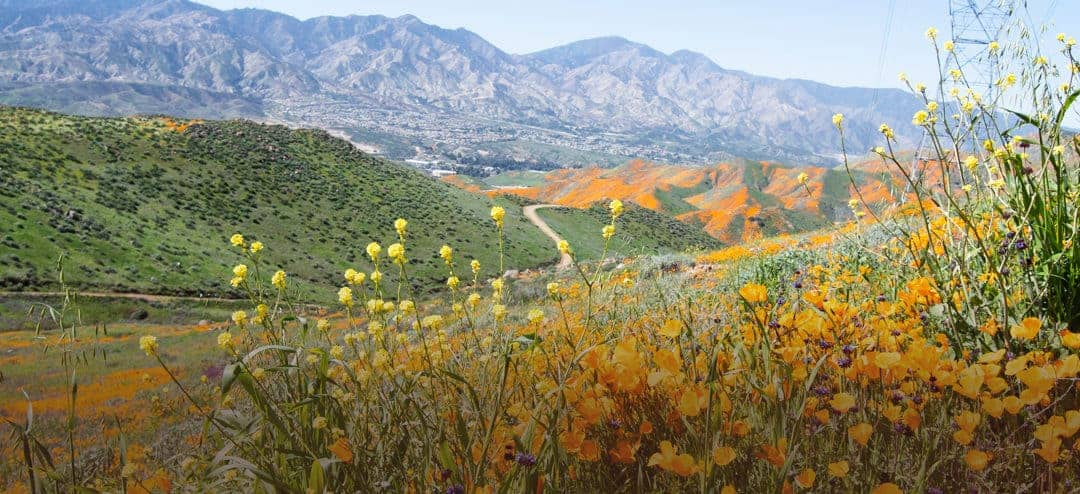 Photographing Poppies at Lake Elsinore