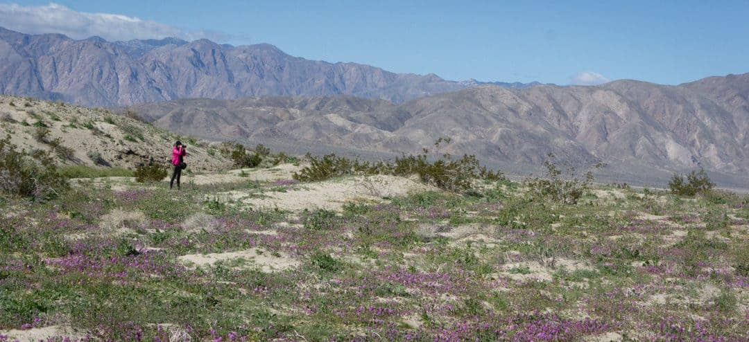 Geothermal Plant Tour and Wild Flowers In Borrego Springs