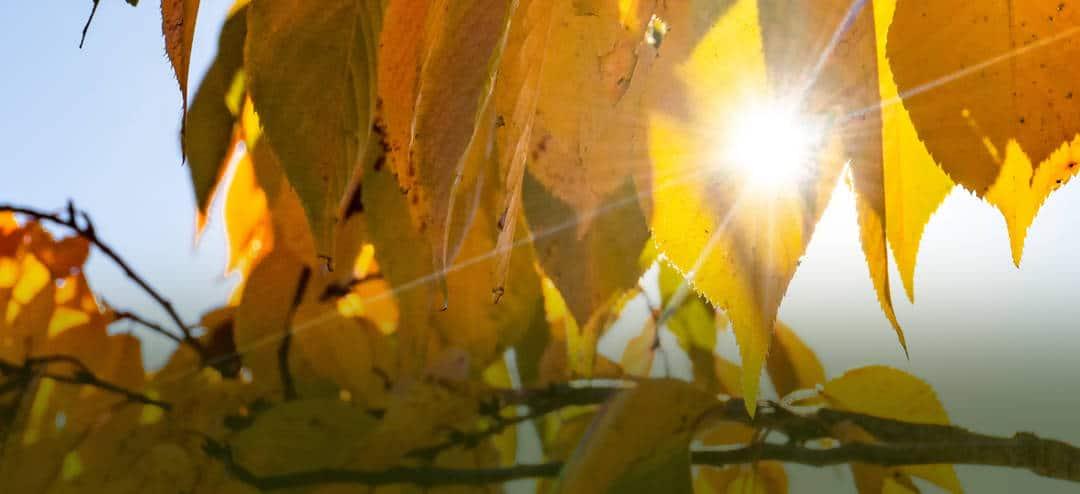 Capturing the Change of Seasons