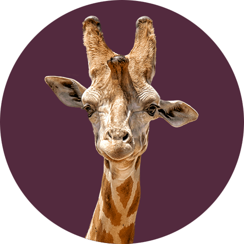 Giraffe mascot for Photos for Artists Etsy store. world traveler and photographer meets arts and crafts.