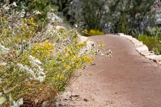 Flowers on Loop trail in Walnut Canyon, AZ