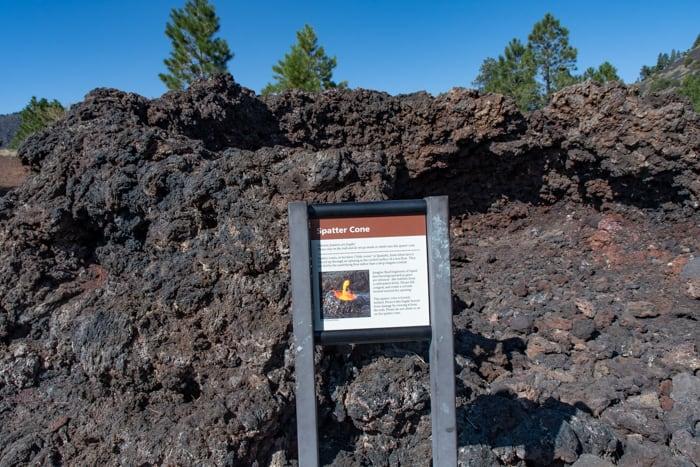 Backlit flower on Lava Flow trail
