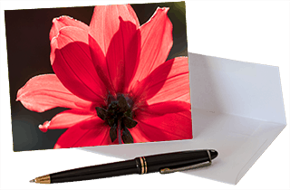 Red Dahlia note card from Footprints and Photos nature set