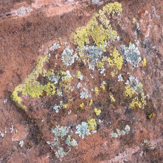 Multi colored lichen on red rock