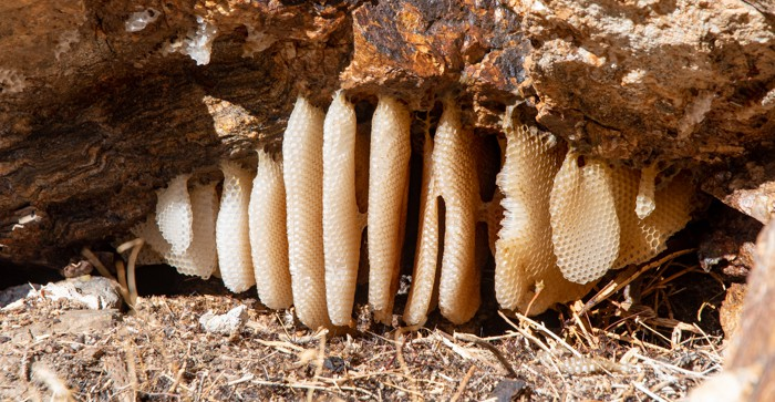 Honeycomb in Rainbow Canyon